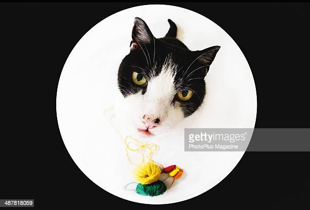 Fisheye portrait of a black and white domestic cat standing over a selection of yarn balls and toy mice, taken on August 16, 2013.