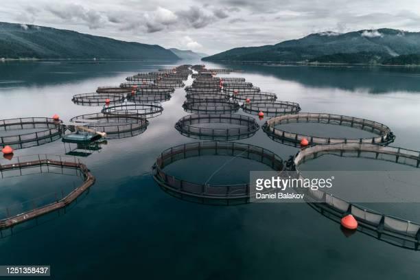 fishing. aerial view over a large fish farm with lots of fish enclosures. - norway stock pictures, royalty-free photos & images