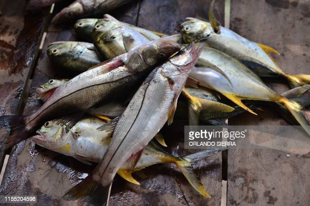 Fishing are seen in Prumnitara Puerto Lempira Honduras on July 8 2019 Thousands of fishing divers of the Mosquitia region where lobster diving...