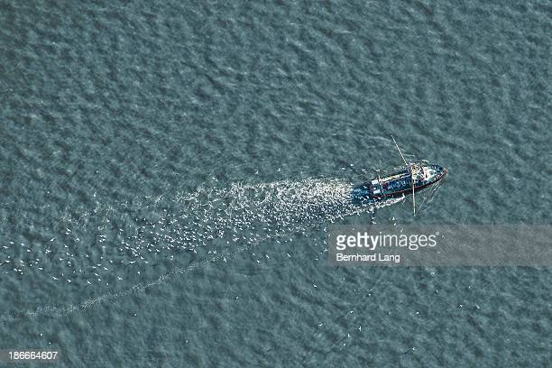 Fishing boat accompanied by gulls, aerial view