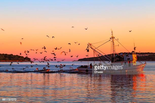 Fishing Boat At Sea With Flock Of Birds Flying Around Against Sunrise