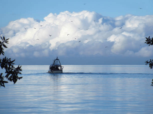 Fishing boat followed by seagulls and cumulus clouds in the background