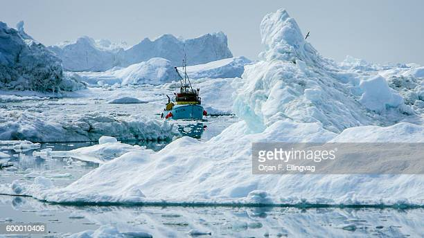 A fishing boat manouvers between icebergs at the mouth of the Ilulissat Icefjord According to researchers at the Danish Meterological Institute the...