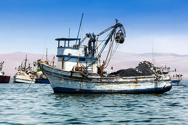 collapse of the canadian fishing industry The canadian fishing industry would traditionally fish just in hindsight a large part of the blame for the collapse of the cod fishery must be aid at.