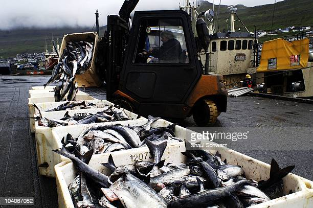 A fishing boat unloads its catch at the dock of Maru Seafood fish factories in Klaksvik the second largest city in the Faroe Islands July 24 2007 The...