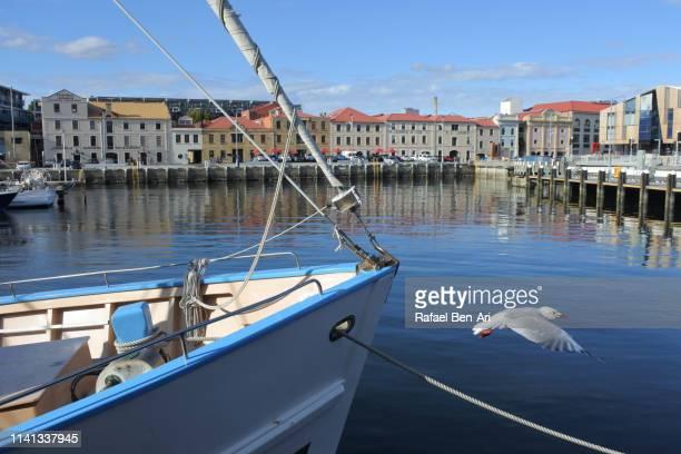 fishing boats in constitution dock hobart tasmania australia - rafael ben ari 個照片及圖片檔