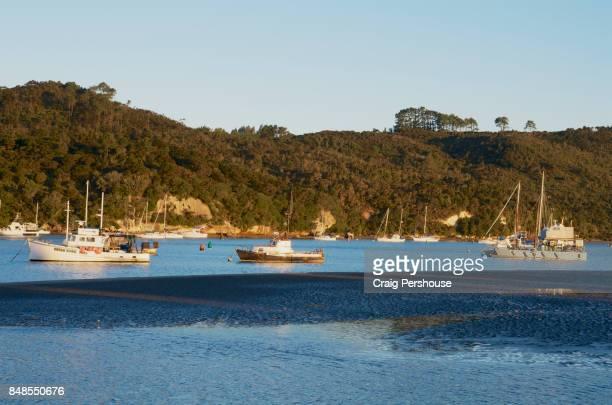 Fishing boats in Mercury Bay.