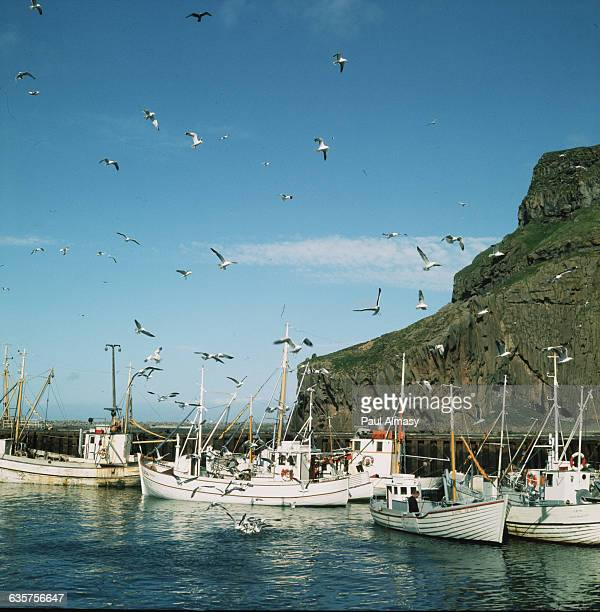 Fishing boats moor at Heimaey in the Vestmann Islands Iceland