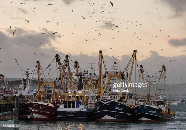 Fishing boats moored in Brixham harbour on March 2 2016 in Devon England The UK's fishing industry is likely to be radically affected by the outcome...