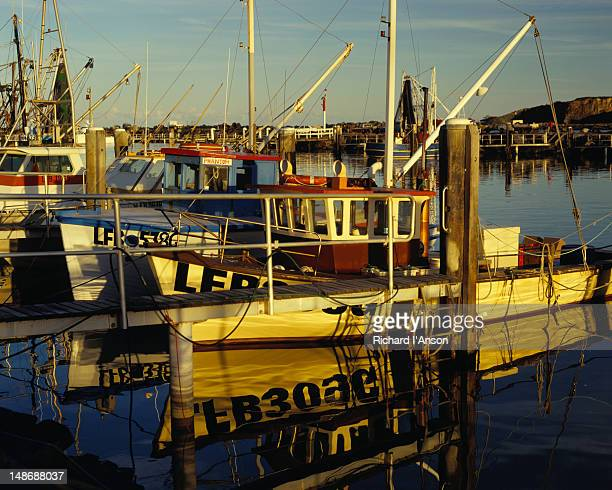 fishing boats moored in coffs harbour. - coffs harbour stock pictures, royalty-free photos & images