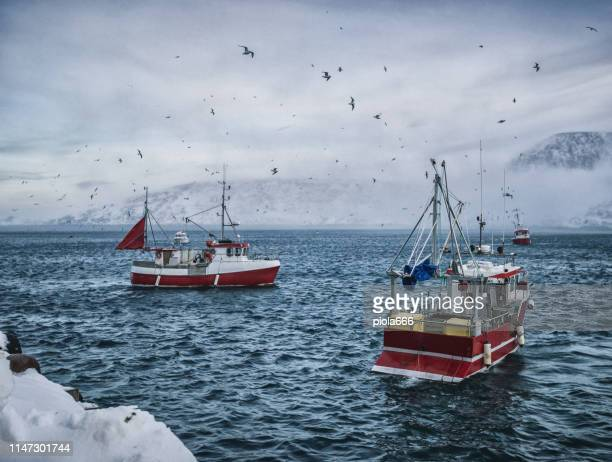 fishing boats out for skrei cod in the arctic sea - fishing industry stock pictures, royalty-free photos & images