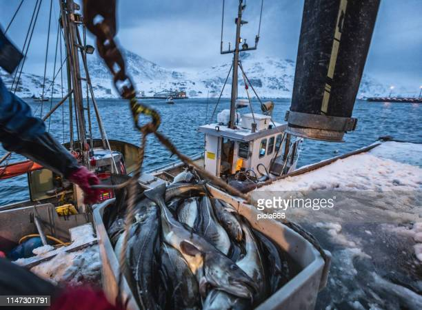 fishing boats out for skrei cod in the arctic sea - seafood stock pictures, royalty-free photos & images