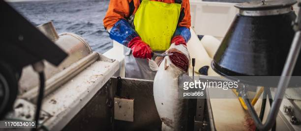 fishing boats out for skrei cod in the arctic sea - northern norway stock pictures, royalty-free photos & images