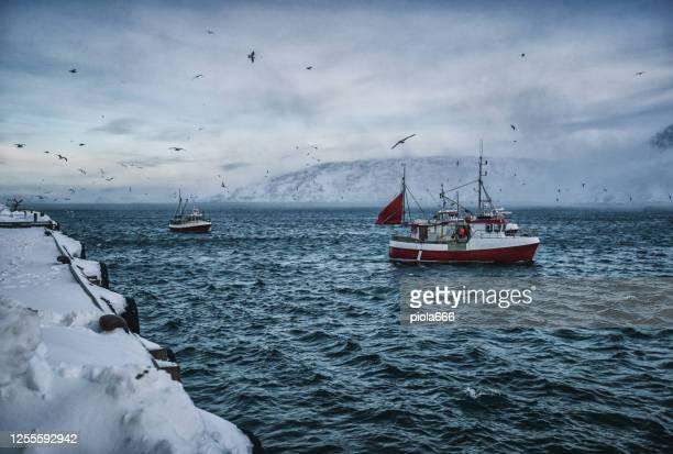 vissersboten uit voor skrei kabeljauw in de arctische zee - arctis stockfoto's en -beelden