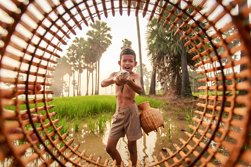 Fishing boy asian farmer people on rice green field during morning time - gettyimageskorea