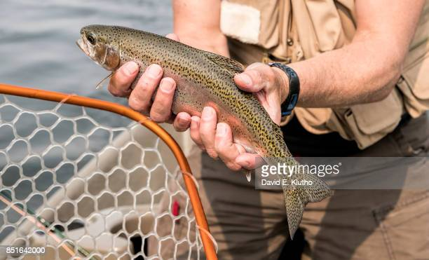 Closeup of Rainbow Trout caught on the Yellowstone River Bozeman MT CREDIT David E Klutho