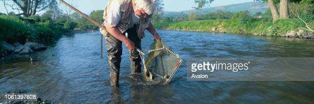 Fishing Club releasing stock into River Clwyd Denbighshire Wales UK.