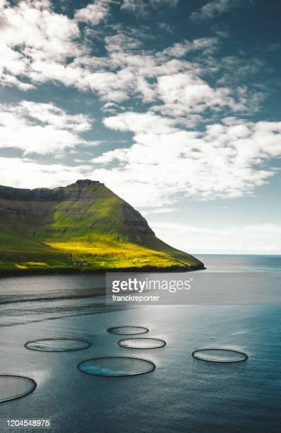 fazenda de pesca em ilhas faroé - ilhas faeroe - fotografias e filmes do acervo