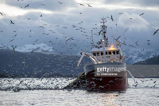 fishing for herring - fishing industry stock pictures, royalty-free photos & images