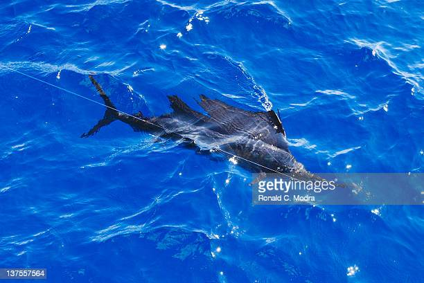 Fishing for sailfish on January 18 2012 in Isla Mejures Mexico