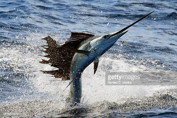 Fishing for sailfish on January 19, 2012 in Isla Mejures, Mexico.