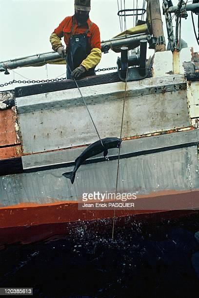 Fishing in Alaska United States Black cod fisherman