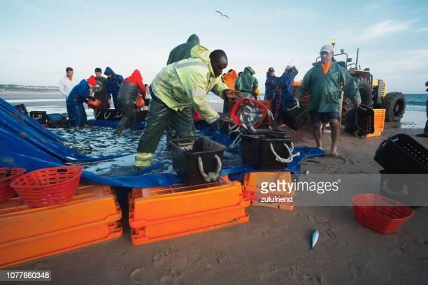 pesca en portugal - organismo vivo fotografías e imágenes de stock