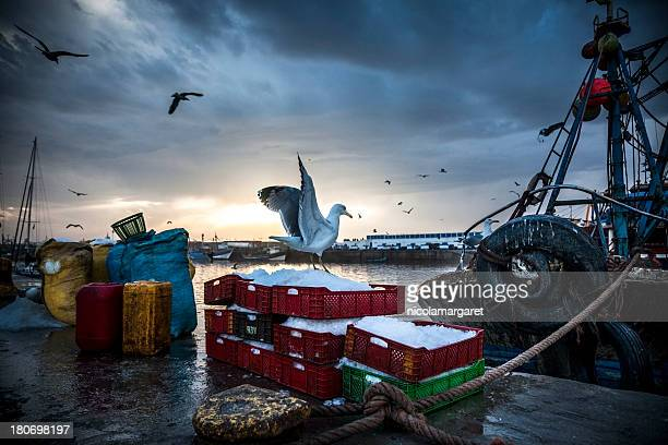 fishing industry: bringing in the catch - fishing industry stock pictures, royalty-free photos & images