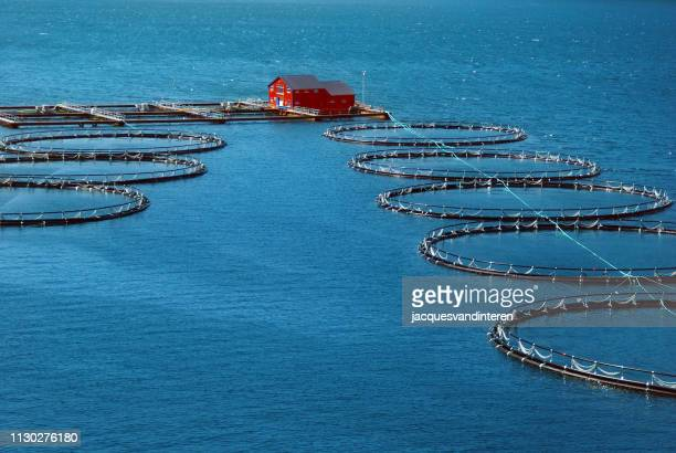 fishing industry in a fjord in norway - aquaculture stock pictures, royalty-free photos & images