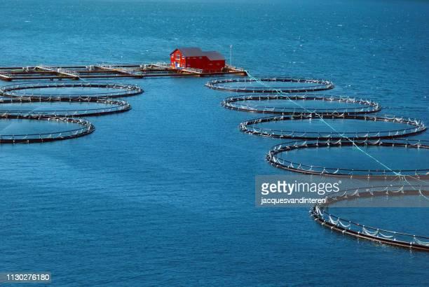 industria della pesca in un fiordo in norvegia - cultura norvegese foto e immagini stock