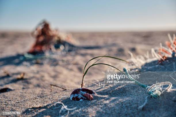 fishing net and ropes buried in the sand at the beach - finn bjurvoll stockfoto's en -beelden