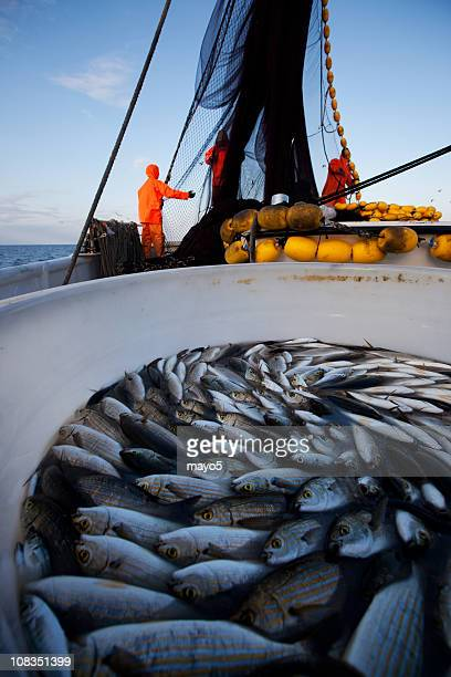 fishing - aquaculture stock pictures, royalty-free photos & images