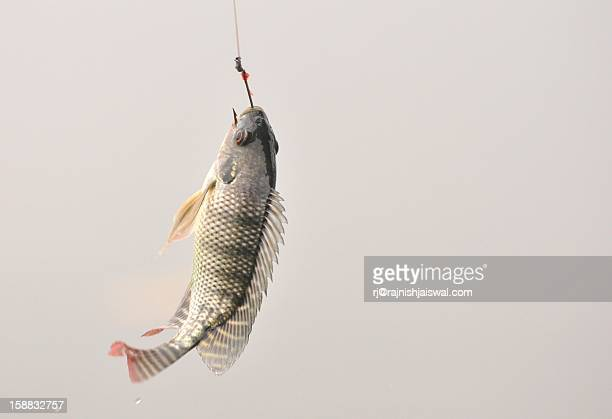 fishing ... - fishing hook stock pictures, royalty-free photos & images