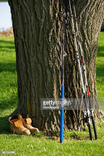 Fishing rods leaning against a tree