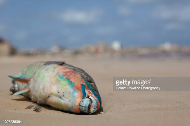 fishing, senegal - food contamination stock photos and pictures