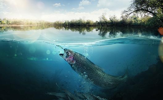 Fishing. The fish underwater 467328464