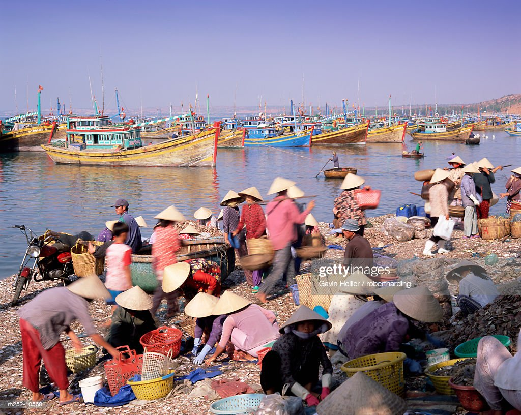 Fishing village people collecting the morning catch from fishing boat fleet, Mui Ne, south-central coast, Vietnam, Indochina, Southeast Asia, Asia : Foto de stock