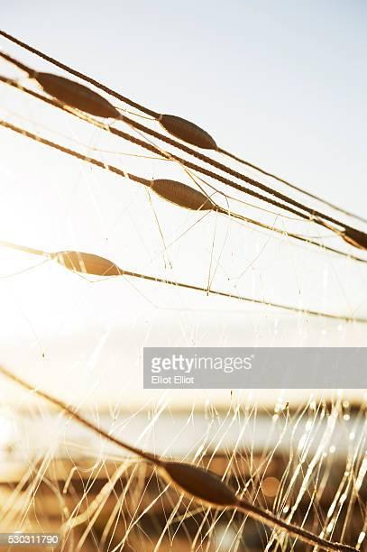 A fishingnet