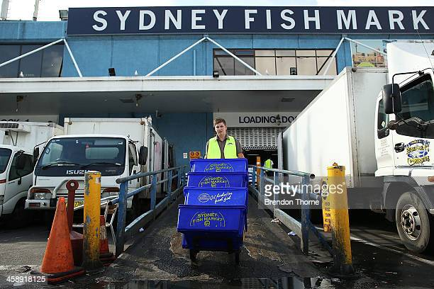 Fishmonger carries fresh festive seafood supplies at the Sydney Fish Market on December 23 2013 in Sydney Australia The Sydney Fish Market...