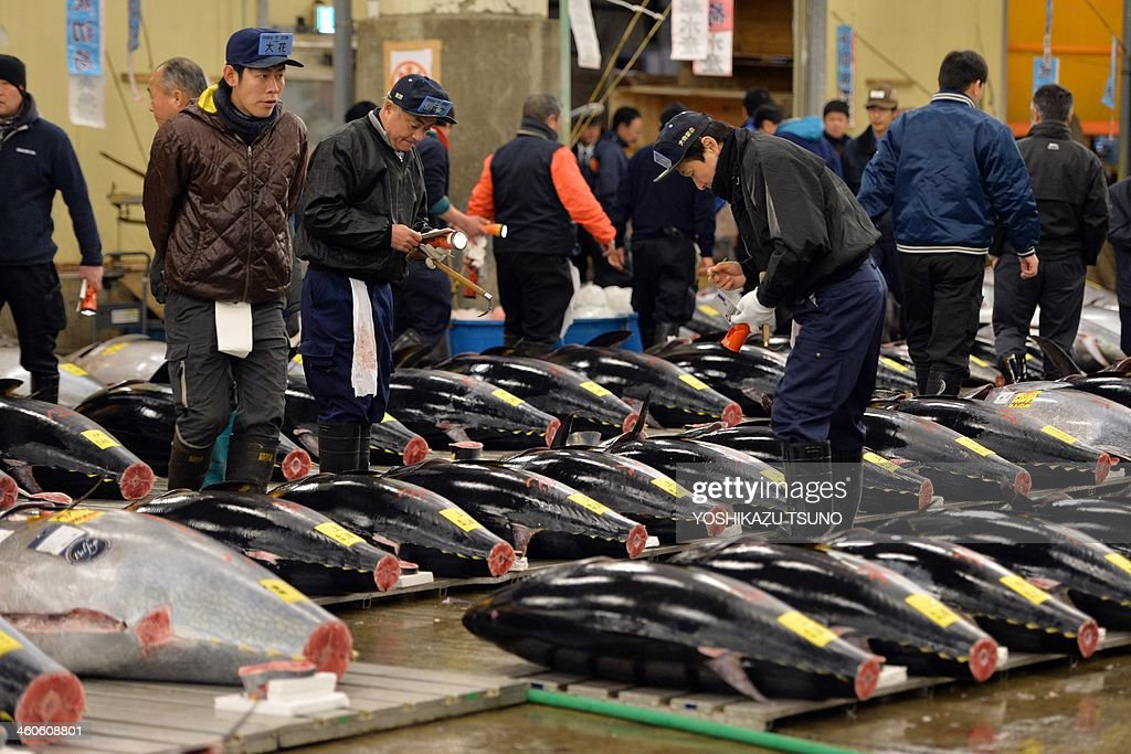 Fishmongers inspect bluefin tunas before the first trading of the new year at Tokyo's Tsukiji fish market on January 5, 2014. A bluefin tuna was on January 5 traded at 70,000 USD (7.36 million yen) at the wholesale market. AFP PHOTO / Yoshikazu TSUNO