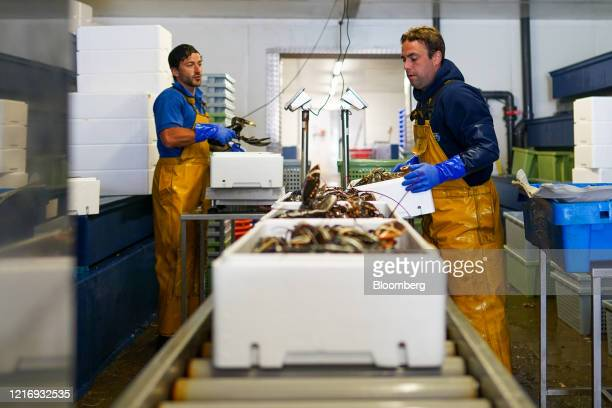Fishmongers pack lobster ready for distribution from the harbour in Scarborough UK on Tuesday June 2 2020 The threat of a nodeal Brexit is back and...