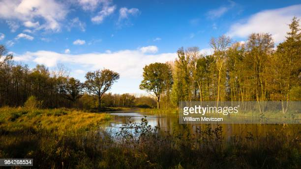 fishpond 'linksstraat' - william mevissen stock pictures, royalty-free photos & images
