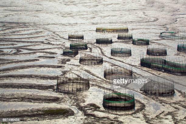 Fishpot on mud flat in Xiapu, Fujian Province, China.