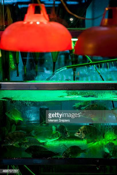 fishtank outside street restaurant - merten snijders 個照片及圖片檔