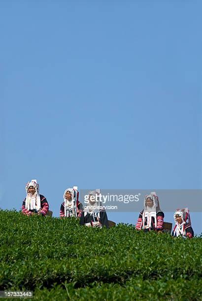 Five Akha Tea Pickers