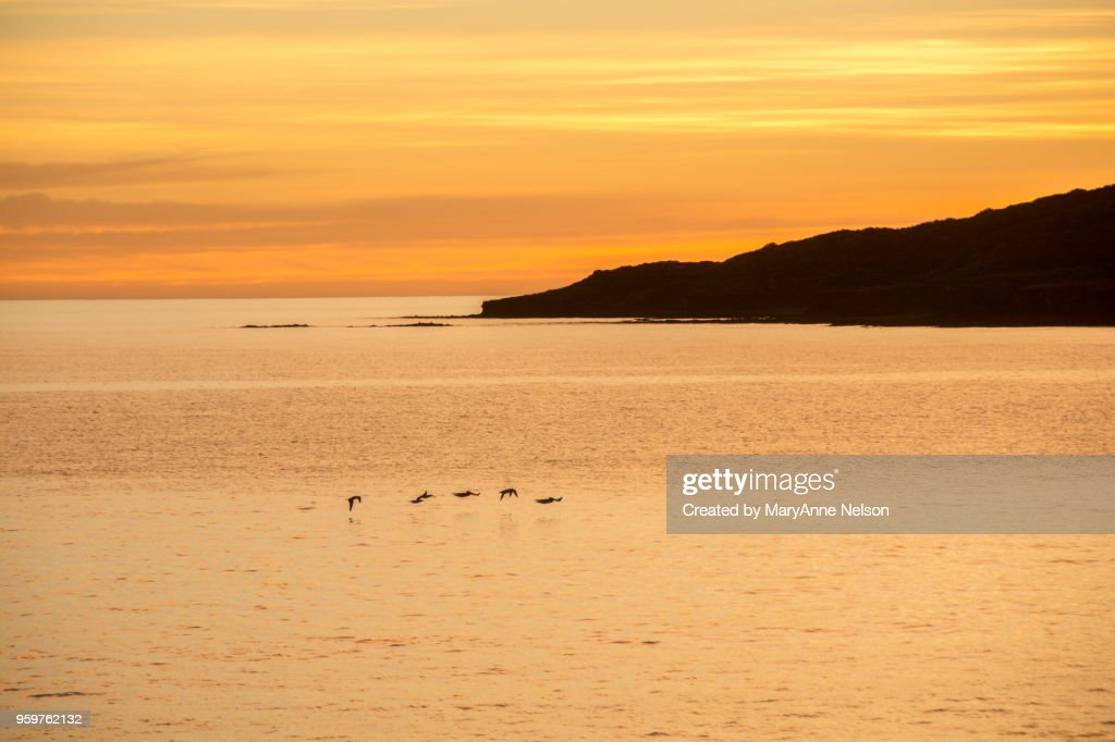 Five Birds, Land and Orange Sunset over Water : Stock-Foto