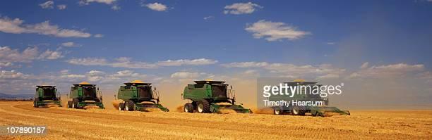 five combines harvesting barley - timothy hearsum ストックフォトと画像