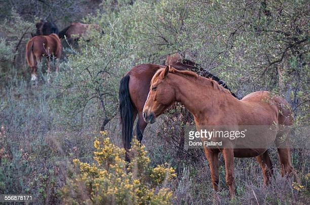 five horses in an olive grove - dorte fjalland stock pictures, royalty-free photos & images