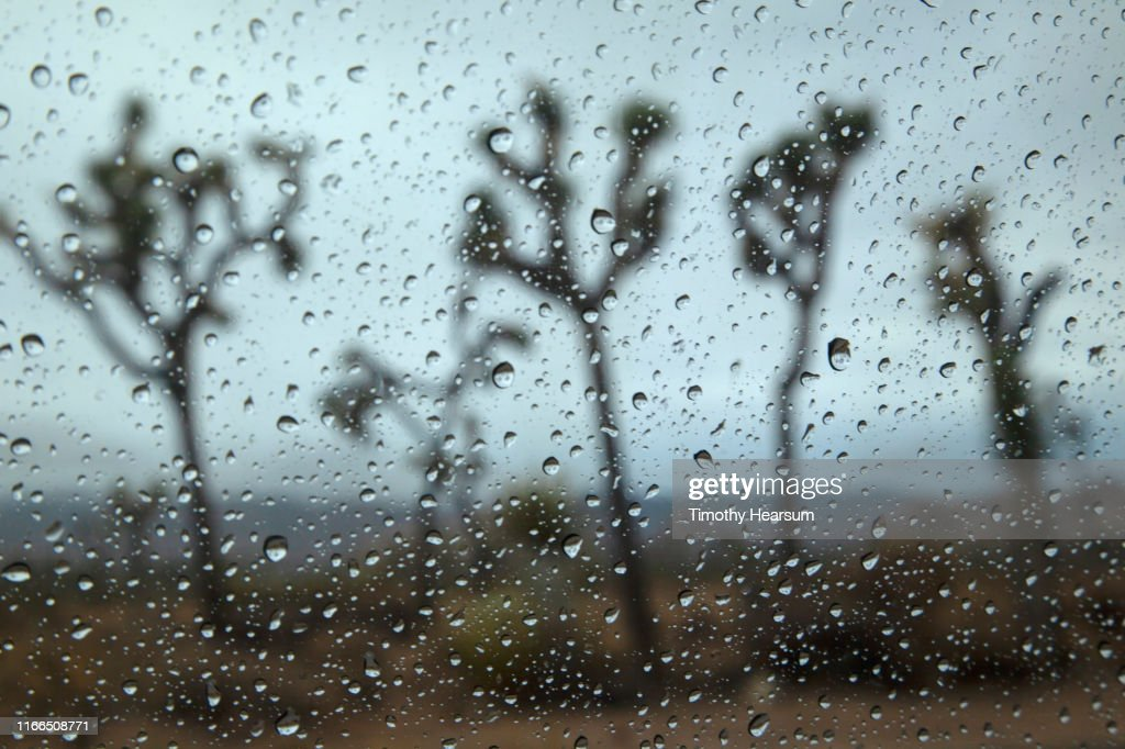 Five Joshua Trees as seen through a rain splattered windshield : Stock Photo
