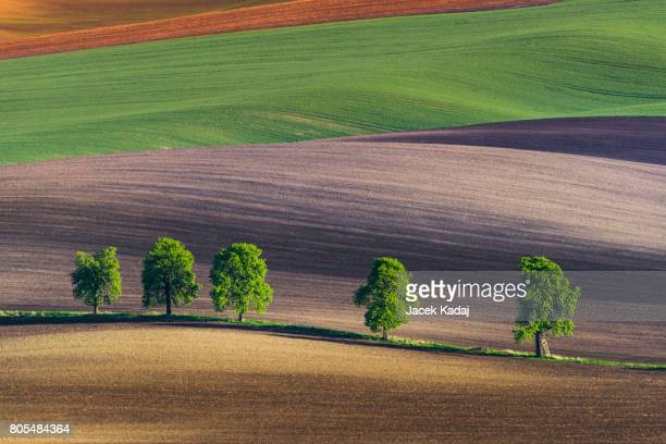 Five lonely trees
